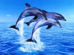 Des dauphins - Fish