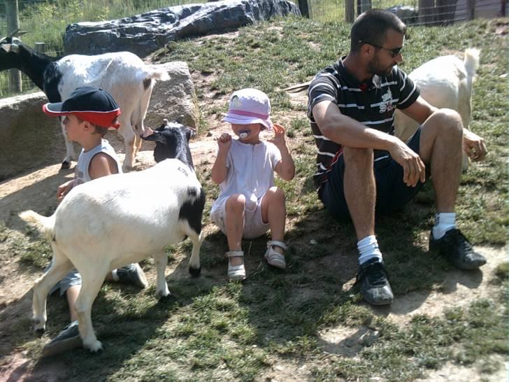 ma jolie - Goat (2 years)
